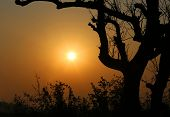 stock photo of bangladesh  - Tree silhouette against sky in Kuakata Bangladesh - JPG