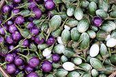 egg plant is thai vegetable