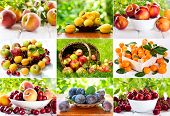 Collage Of Various Fruits And Berries
