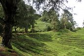 Road And Tea Plantation