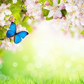 Spring apple blossoms with butterflies. Blur green background with free space for text.