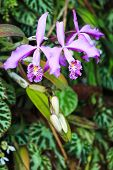 Elongated Orchid