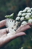 Beautiful white butterfly perched on the hand and outstretched palm of a woman as it feeds on the nectar of a wildflower against a dark background