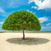 Decorative shaped tree on the beach on Koh Phangan island, Thailand
