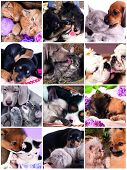picture of coon dog  -  Funny kissing kittens and puppies  - JPG