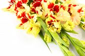 picture of gladiolus  - Red and yellow bright gladiolus  - JPG