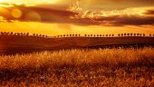 Yellow sunset over farmland, majestic view on dry golden wheat hills, agricultural landscape in Italy, autumnal season concept