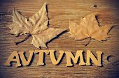wooden letters forming the word autumn and some autumn leaves on a weathered wooden background