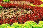 Flowerbed background