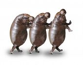 Three obese hippos have a fun. poster