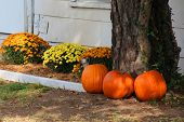 Lots of pumpkins and other decorations for fall season near a cozy house