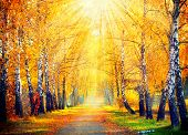 Autumn. Fall. Autumnal Park. Autumn Trees and Leaves in sun rays. Beautiful Autumn scene  poster