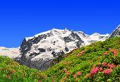 Mount Monte Rosa  - Swiss Alps