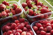 Punnets Of Strawberries And Raspberries, Close-up