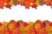bright autumn leaves frame isolated on white background