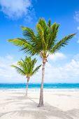 Two Palm Trees Grow On Empty Sandy Beach