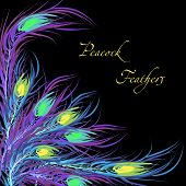 Vector feathers peacock. Black background. Fashionable design ep