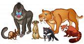 Illustration of many kind of animals