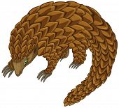 Illustration of a close up pangolin