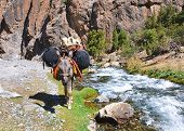 Donkey In The Mountain River Laden Backpacks
