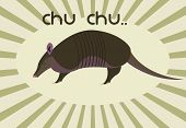 stock photo of armadillo  - An adorable sweet little armadillo saying chu - JPG