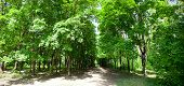 Beautiful summer green park with a footpath