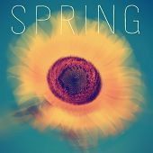 stock photo of northern hemisphere  - the text spring written on a blurred image of a sunflower - JPG