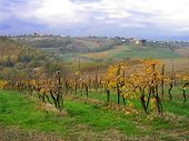 Tuscan Vineyard in Chianti