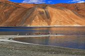 stock photo of extend  - Refelction of Mountains on Pangong tso  - JPG