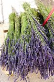 bunch of lavenders, market in Nyons, Rhone-Alpes, France