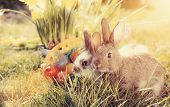 stock photo of easter eggs bunny  - Living Easter bunny with eggs in a basket on a meadow in spring - JPG