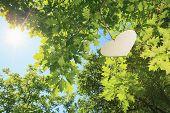 A heart floting on a big tree