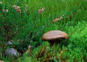Small Mushroom On A Rainy Day