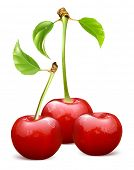 Ripe red cherries with leaves. Vector illustration.