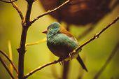 Beautiful Bird Siting In Tree
