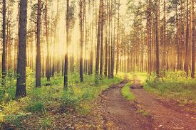 picture of dirt road  - beautiful sunset in the woods - JPG