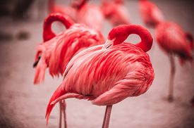 stock photo of pink flamingos  - Pink flamingos crowd standing against green background - JPG