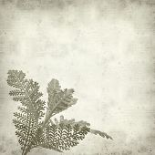 stock photo of tansy  - textured old paper background with silver tansy leaf - JPG