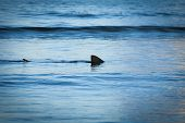 picture of fin  - Fin of a shark in the high sea. ** Note: Soft Focus at 100%, best at smaller sizes - JPG