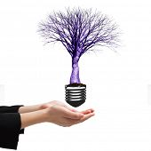 pic of presenting  - Businesswomans hands presenting against empty light bulb - JPG