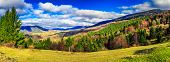 stock photo of conifers  - panoramic image of autumn forest with conifer trees on mountain hillside - JPG