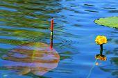 stock photo of fishing bobber  - Fishing bobber floating in the lake water among lilies - JPG