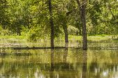stock photo of flood  - Trees reflecting on the flood water of Fish Creek in Calgary - JPG