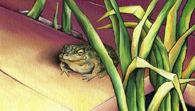 image of cute frog  - Cute frog sitting in the rushes - JPG