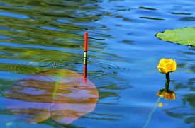 pic of fishing bobber  - Fishing bobber floating in the lake water among lilies - JPG
