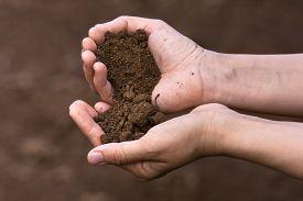 stock photo of humus  - the fertile soil in hands of women - JPG