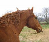 Cavalo e principal