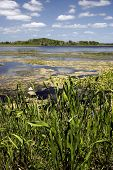 Wetlands Beauty