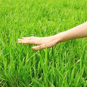 Hand über grüne Gras