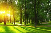 Sunset in park with trees and green grass